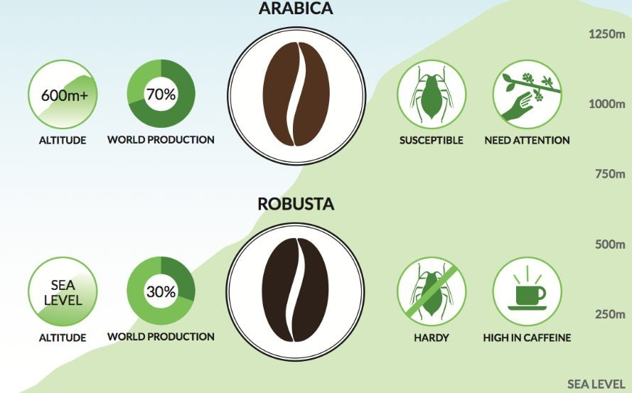 Caffeine amount in Arabica and Robusta